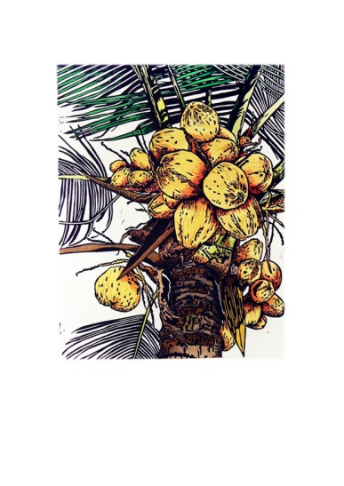Coconuts by Fiona Watson
